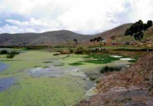 contaminacion-lago-titicaca