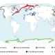 distribucion-mundial-focas[1]