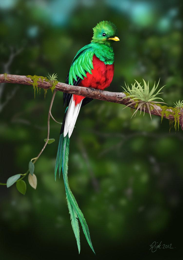 Fauna latinoamericana: el sagrado Quetzal | Otro Mundo Es ...
