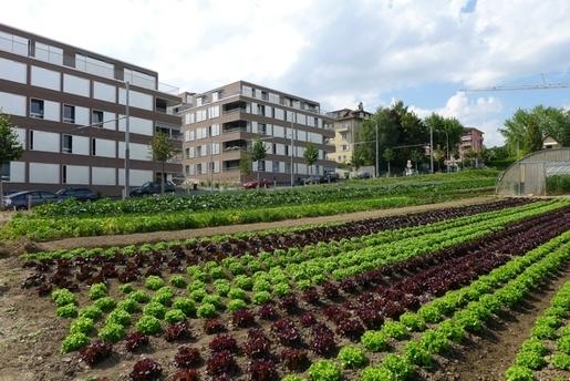 agricultura-urbana[1]
