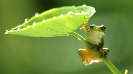 hang-on-green-frog-hd-wallpaper-2-2560x1440[1]