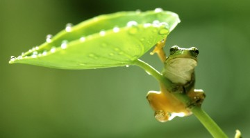hang-on-green-frog-hd-wallpaper-2-2560x1440[1]
