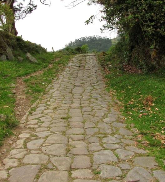 camino honda4