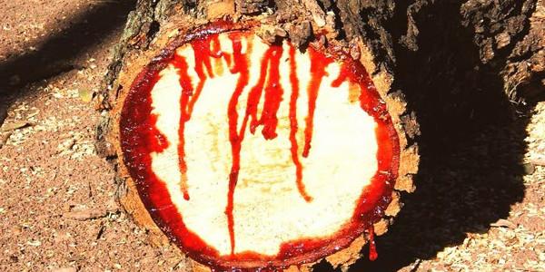 madera de sangre
