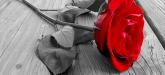 la-rosa-cortada