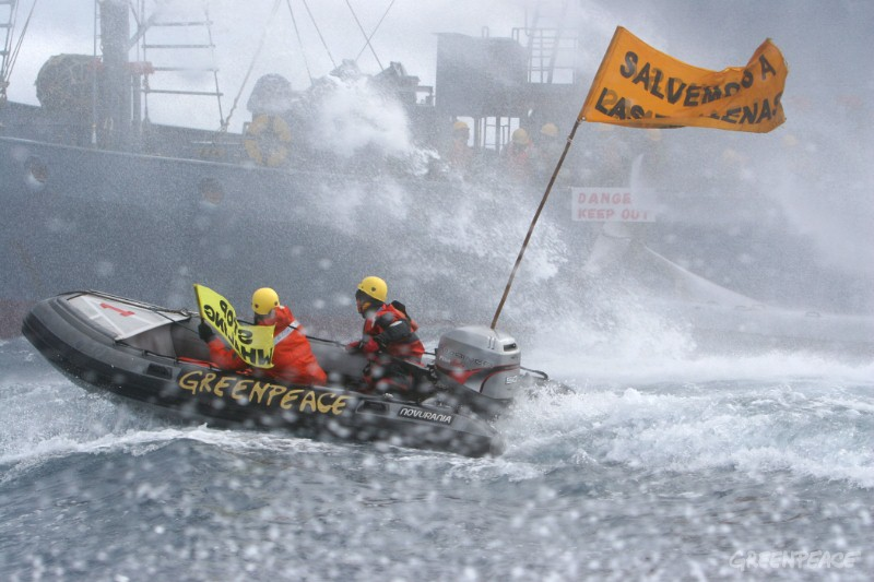 Greenpeace encounter Japanese whaling fleet in the Southern Ocean today and attempt to disrupt the whaling operation.